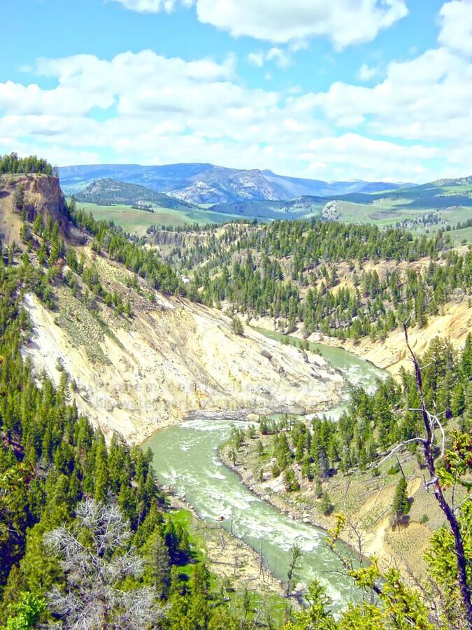 Wild Yellowstone  Print