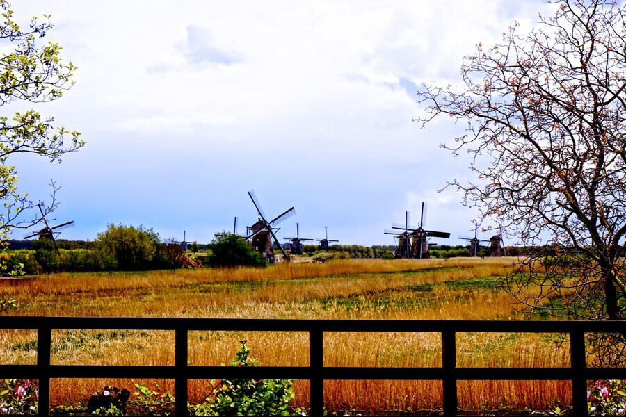 Windmills in Spring  Print