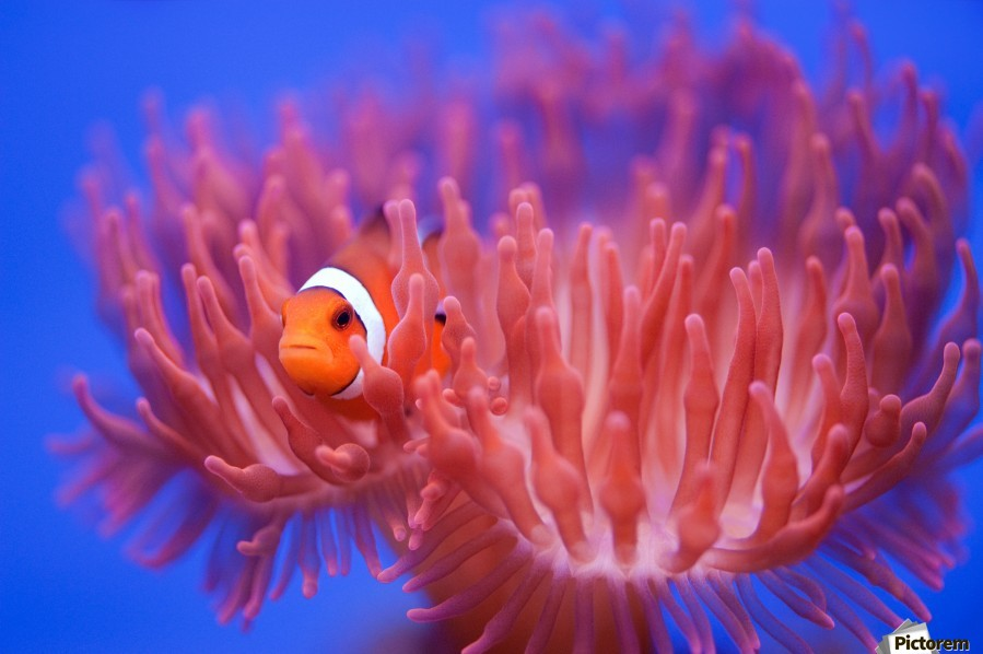 Finding Nemo  Print