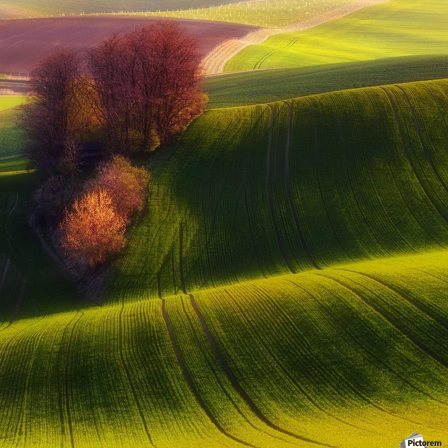 Green fields  Print