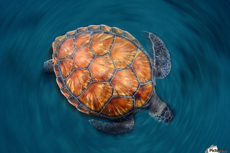 spin turtle  Print