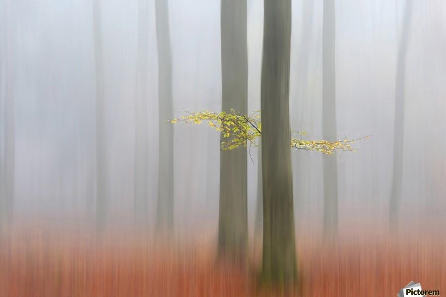Autumnmorning  Print