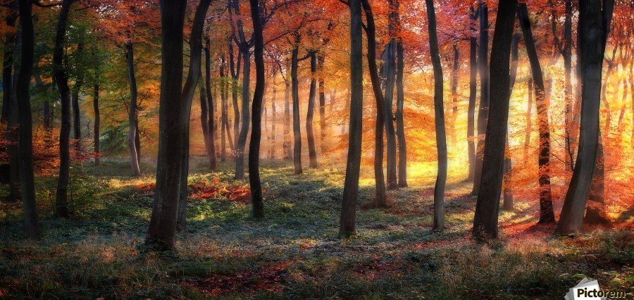 Autumn Woodland Sunrise  Print