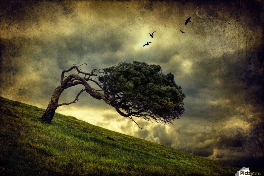 Winds of Change by Peter Elgar   Print