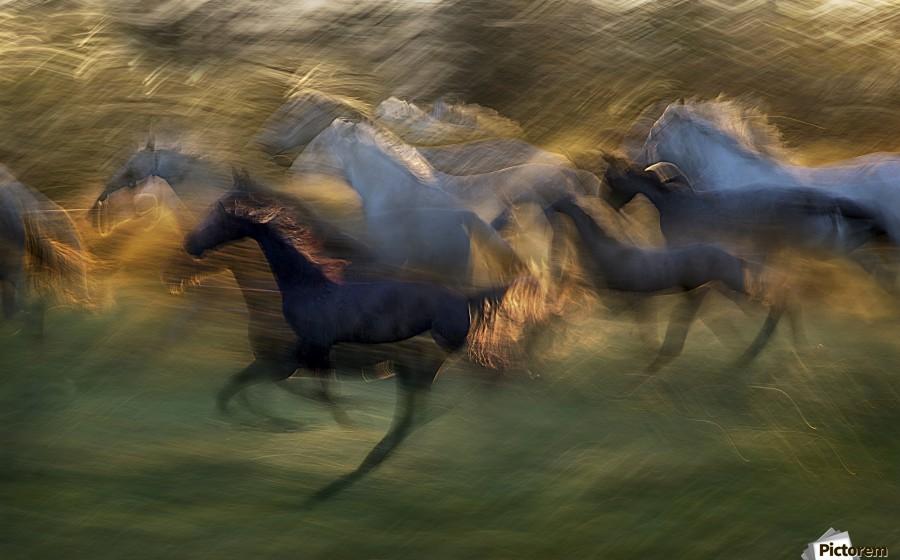 fiery gallop by milan malovrh   Print