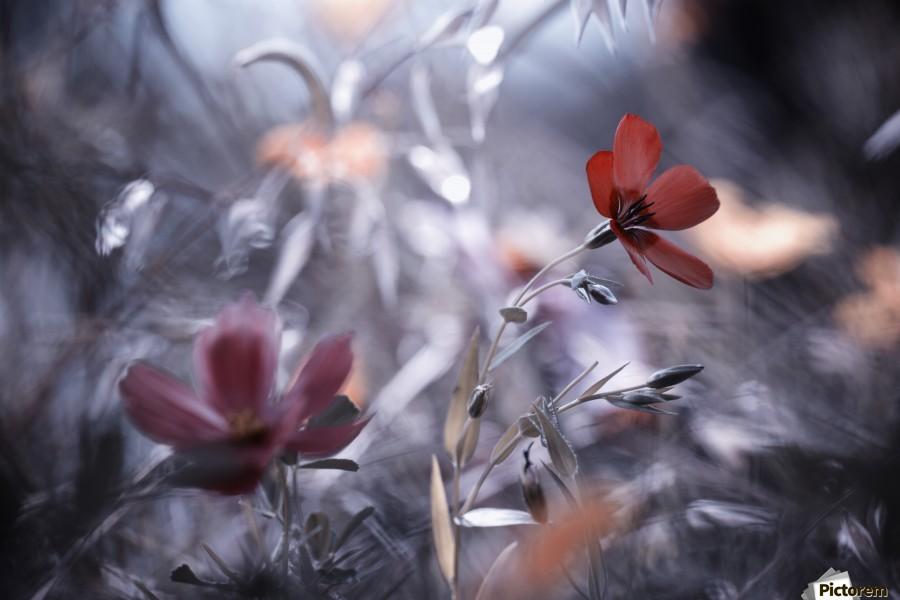 Une Fleur, une Histoire by Fabien BRAVIN   Print