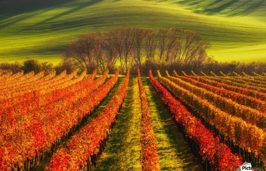 vine-growing  Print