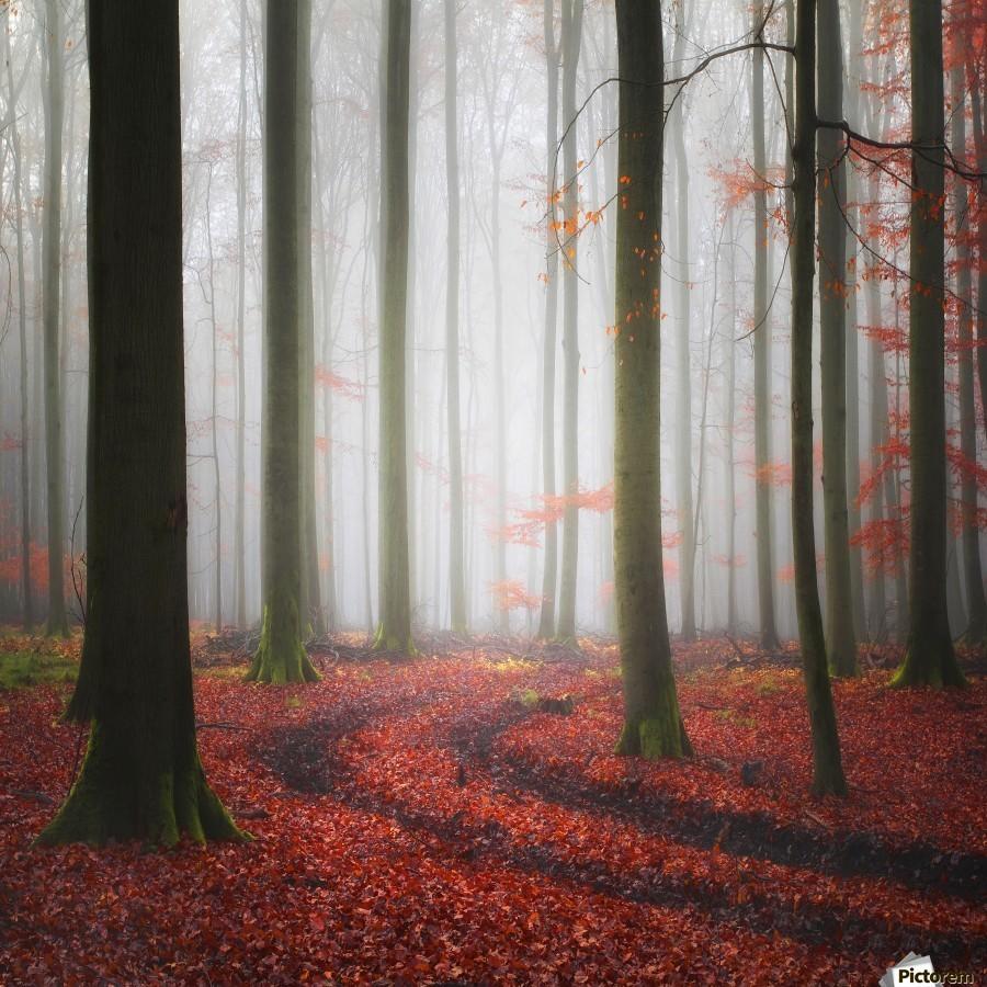 Autumnal Tracks  Print