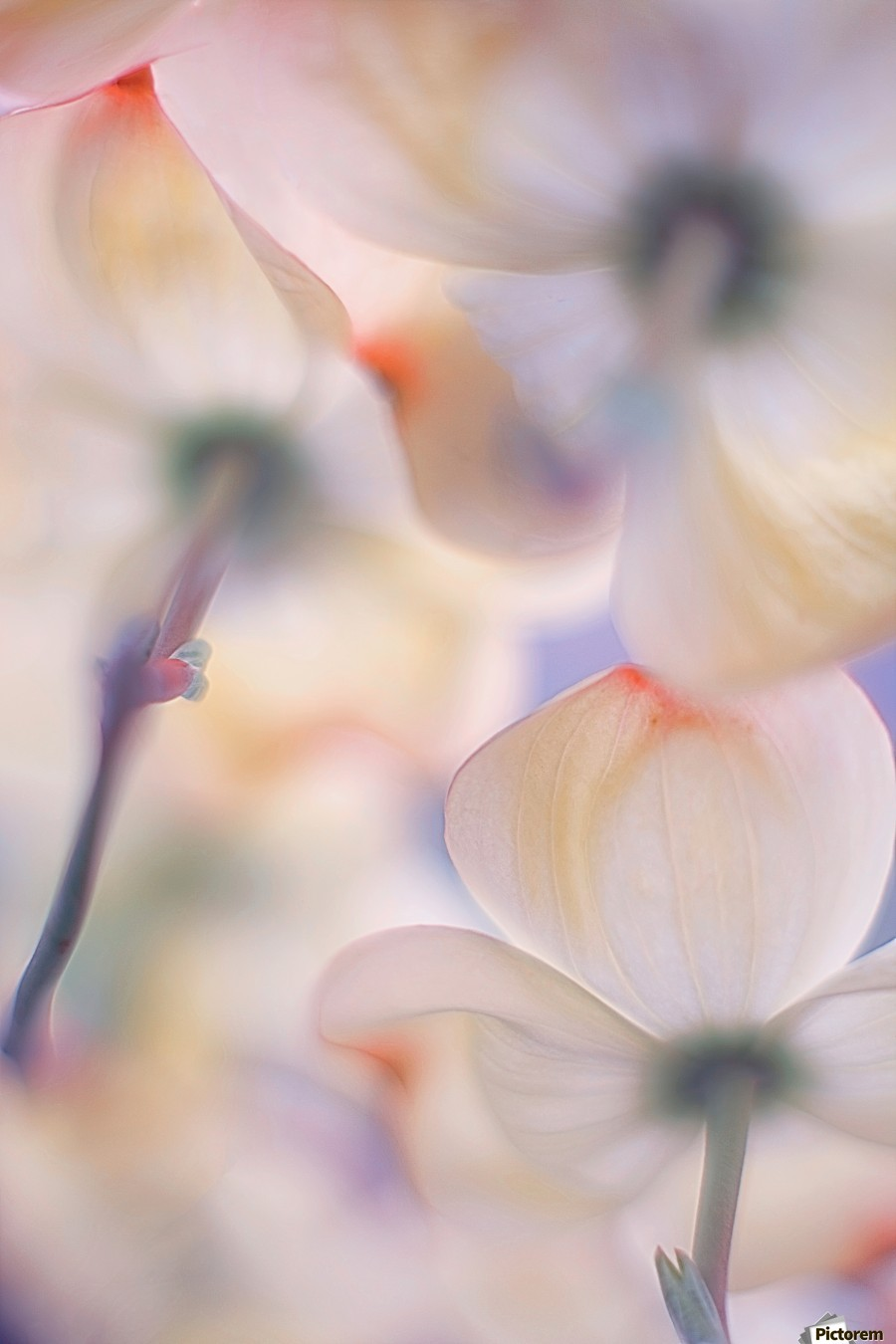 Under the skirts of flowers  Print