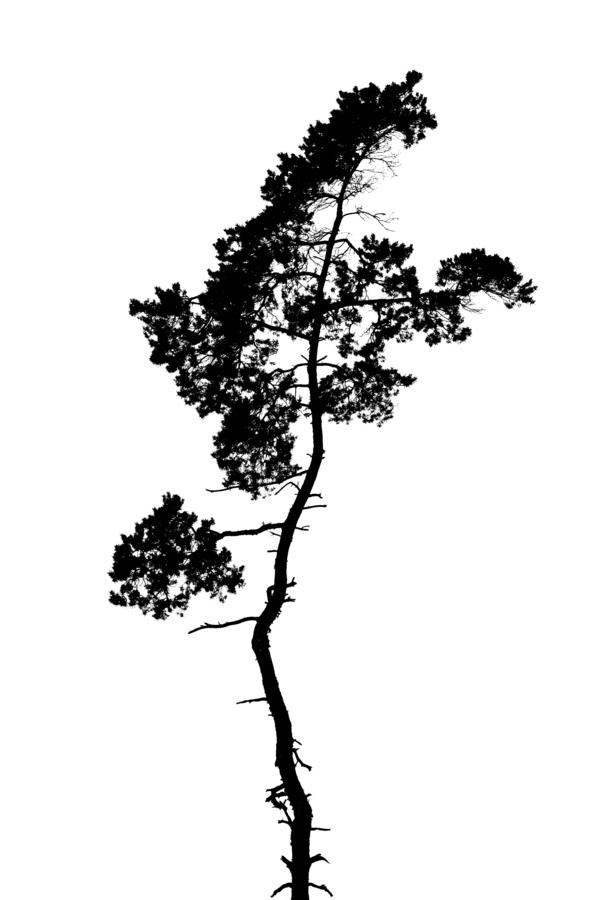 Tree silhouette  Print