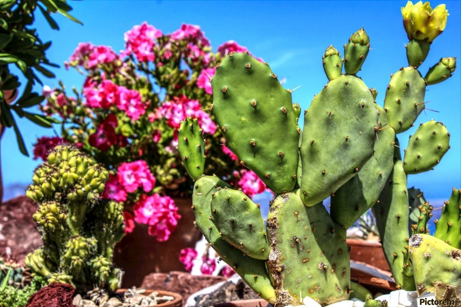 Cactus and colourful Flowers  Print