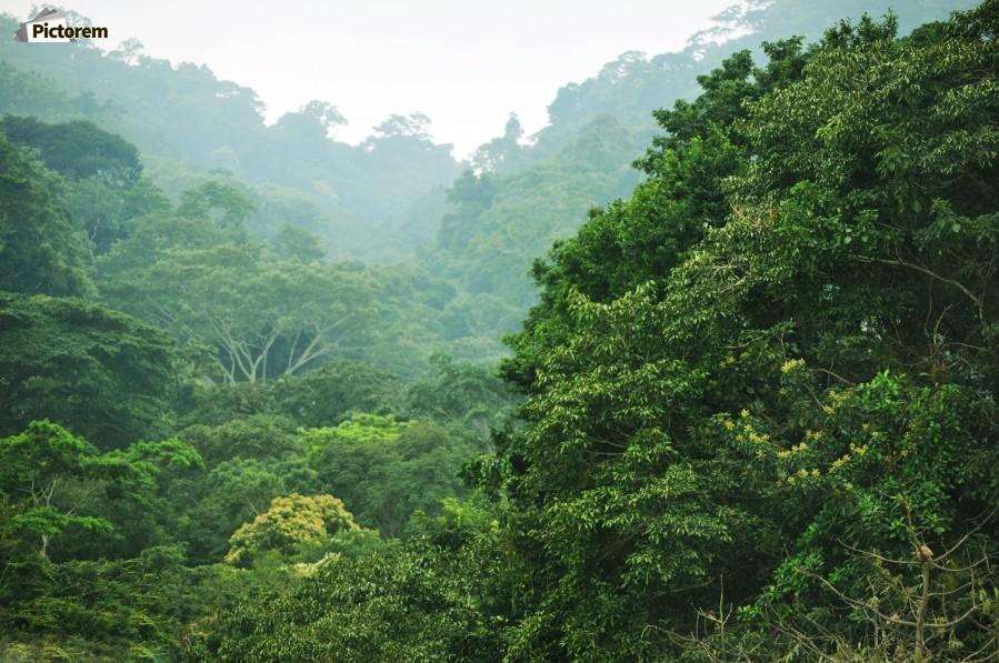 Rainforest Canopy  Print