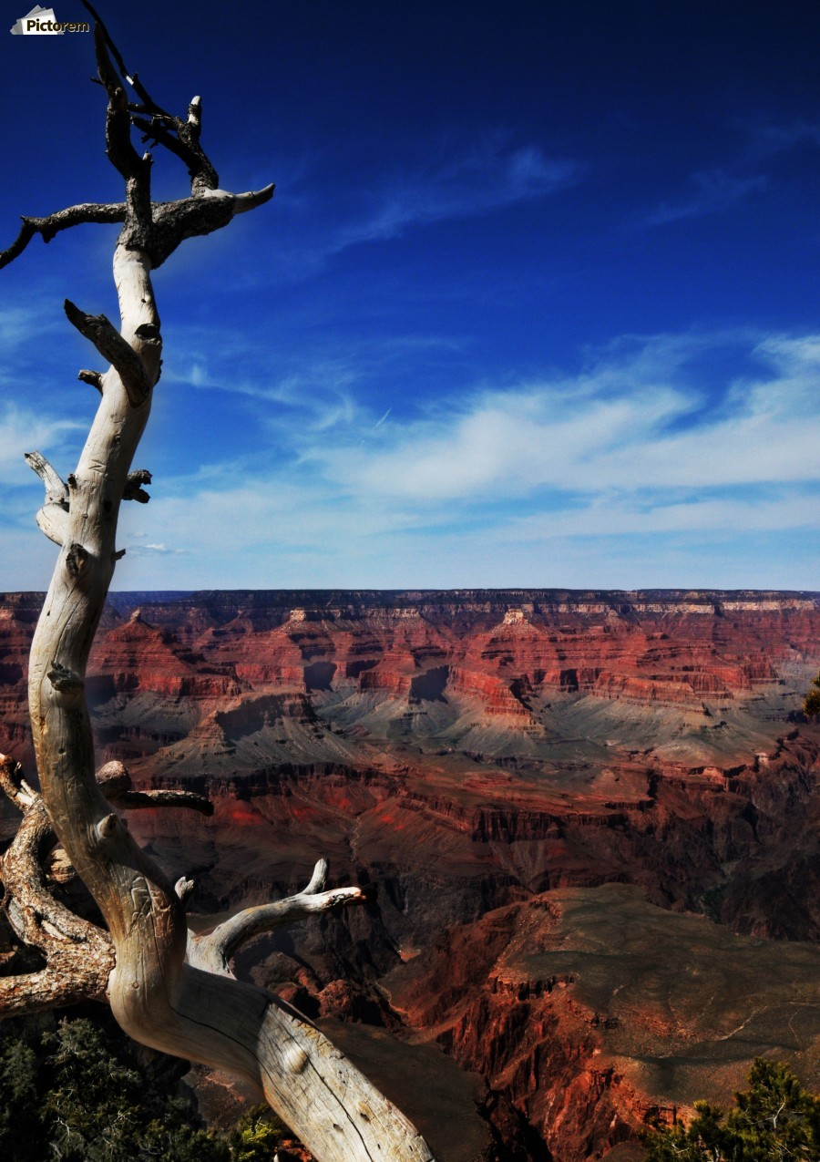 Grand Canyon framed by tree  Print