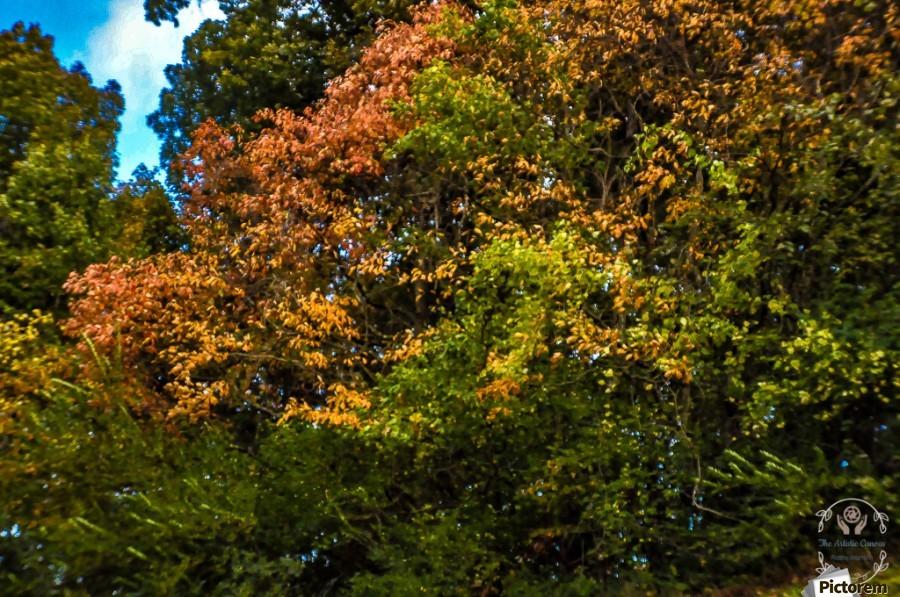 Nature in Fall  Print