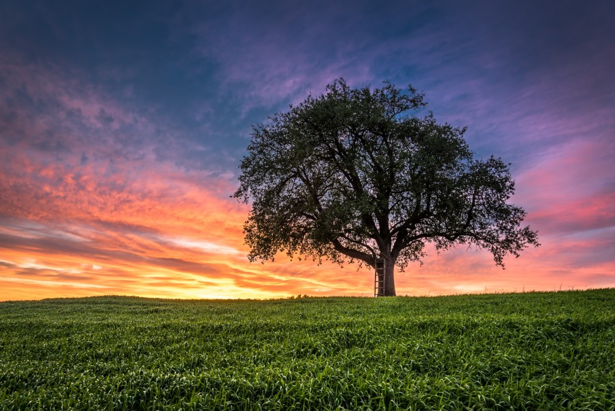 Lonely Tree at Sunset  Print