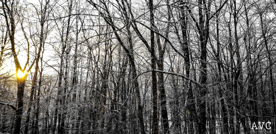 Through the Icy Trees  Print