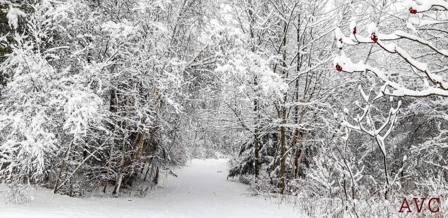 Winter Wonderland  Imprimer