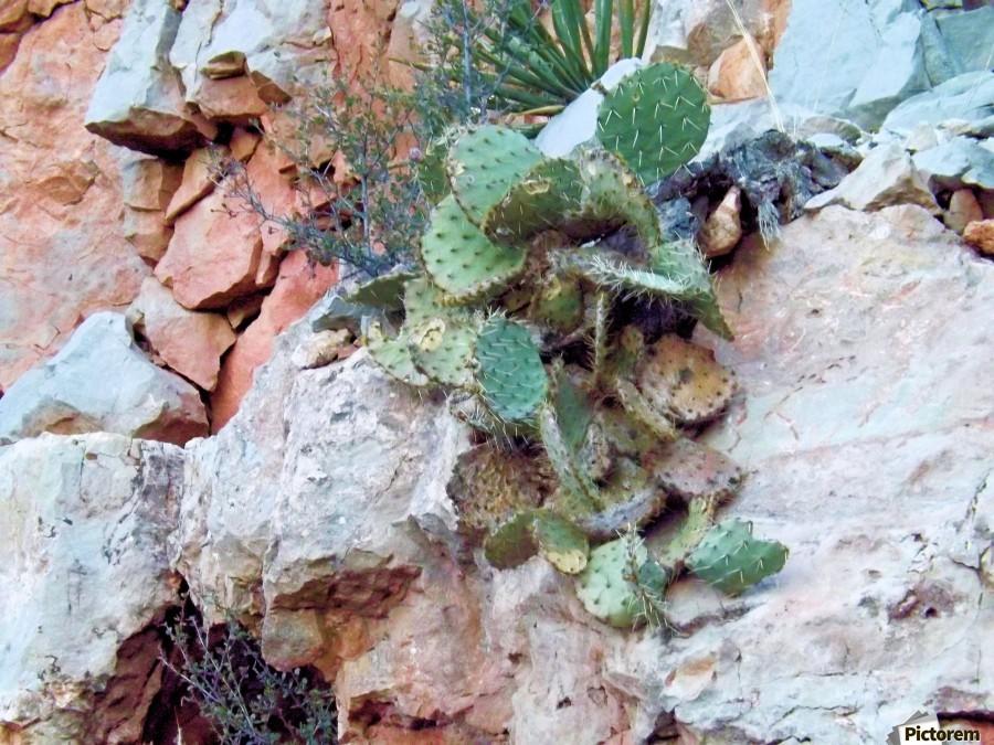 Cactus  Imprimer