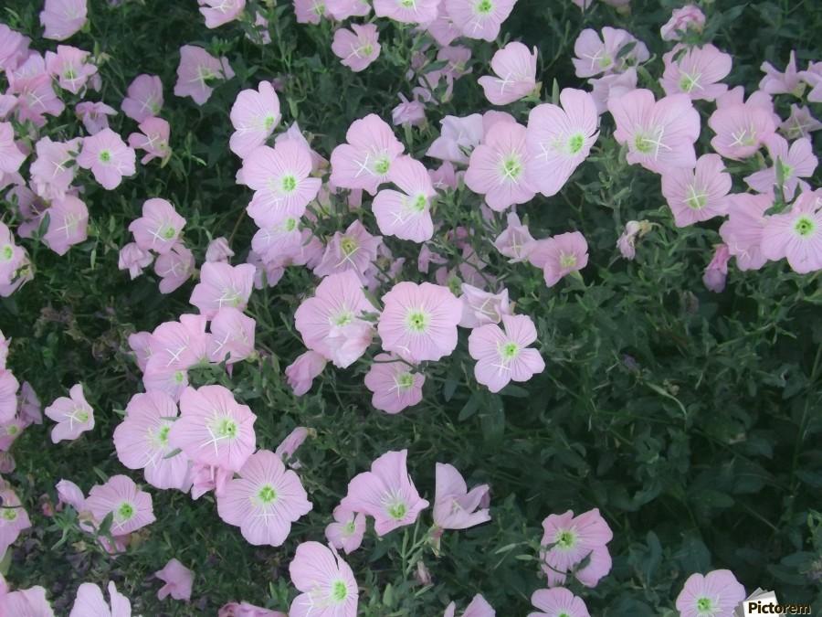 Flower Garden 2  Print