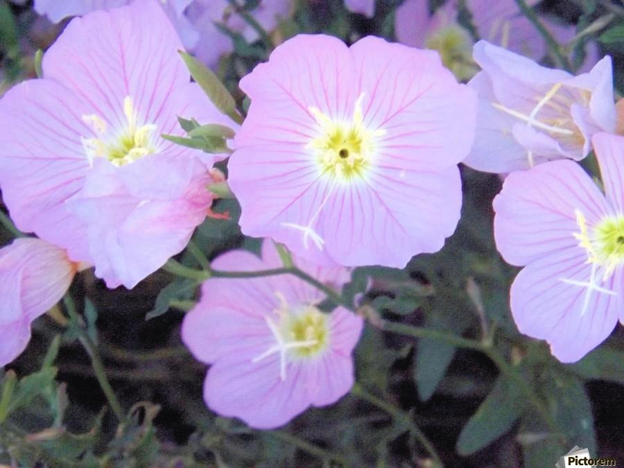 Flowers  Imprimer