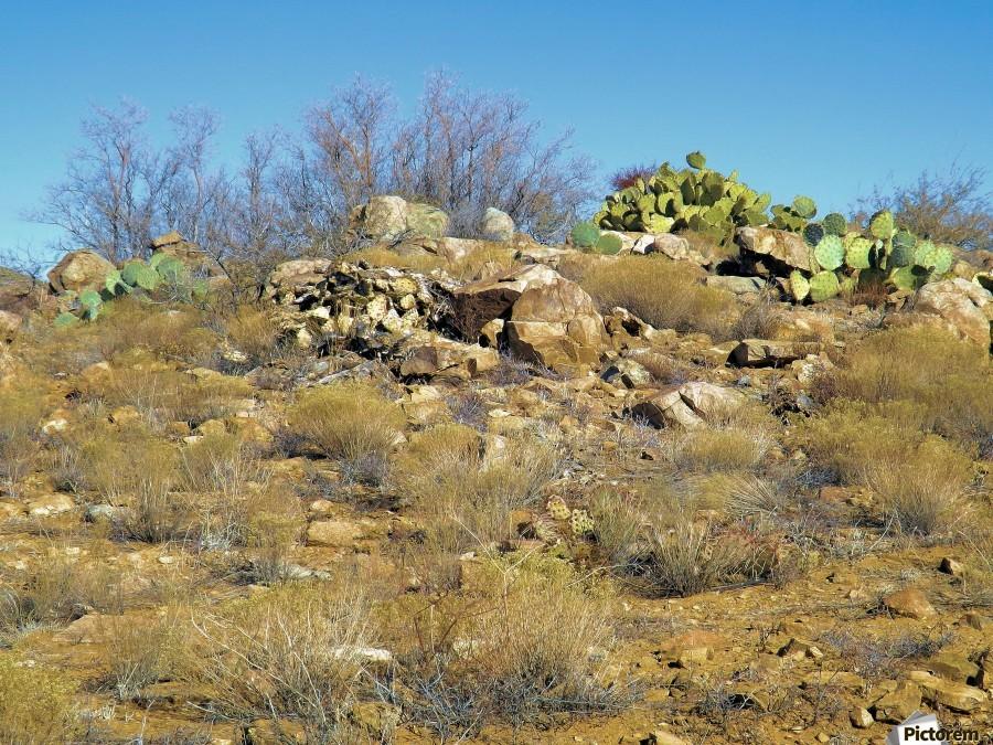 Rock n Cactus  Print