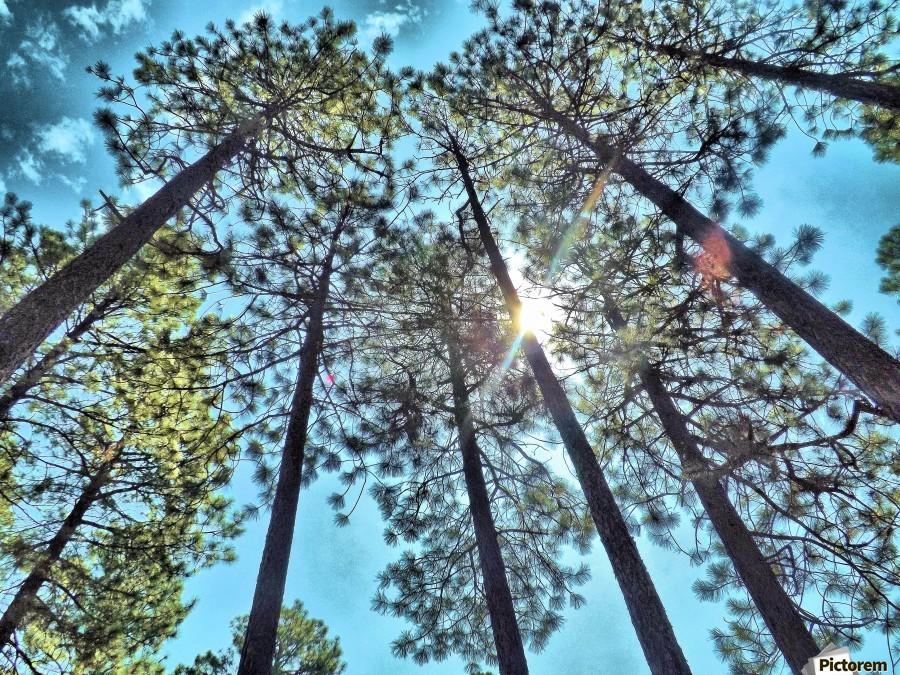 Tree Tops  Imprimer