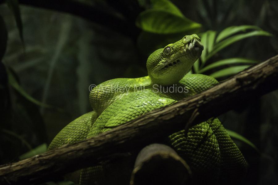 High Detail  Green Boa   Print