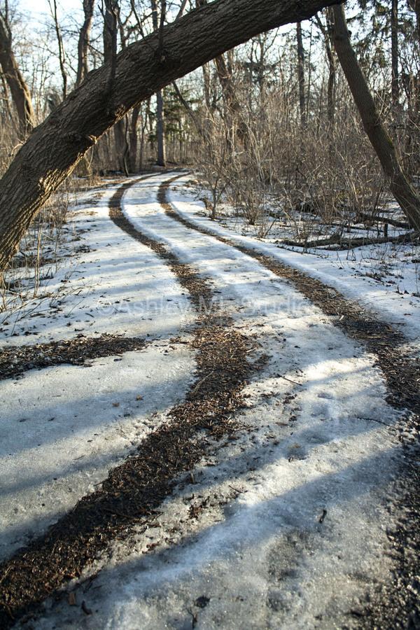 Snowy Trails  Print