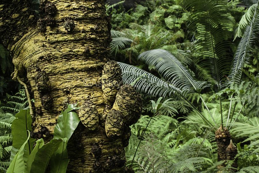 Trees Textures  Print