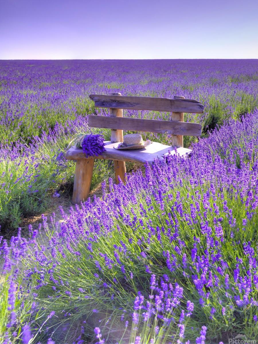 Bench in Lavender field  Print