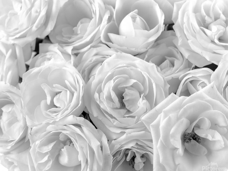 Full frame of roses  Print