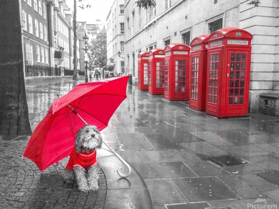 Dog with umbrella on London city street  Print