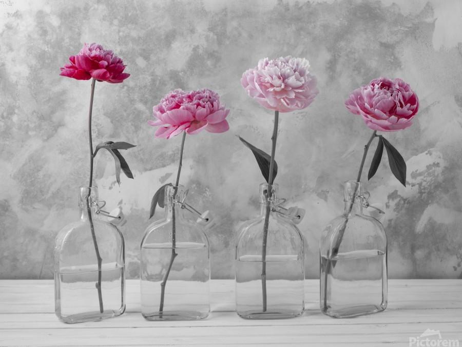 Peonies in glass bottles  Print