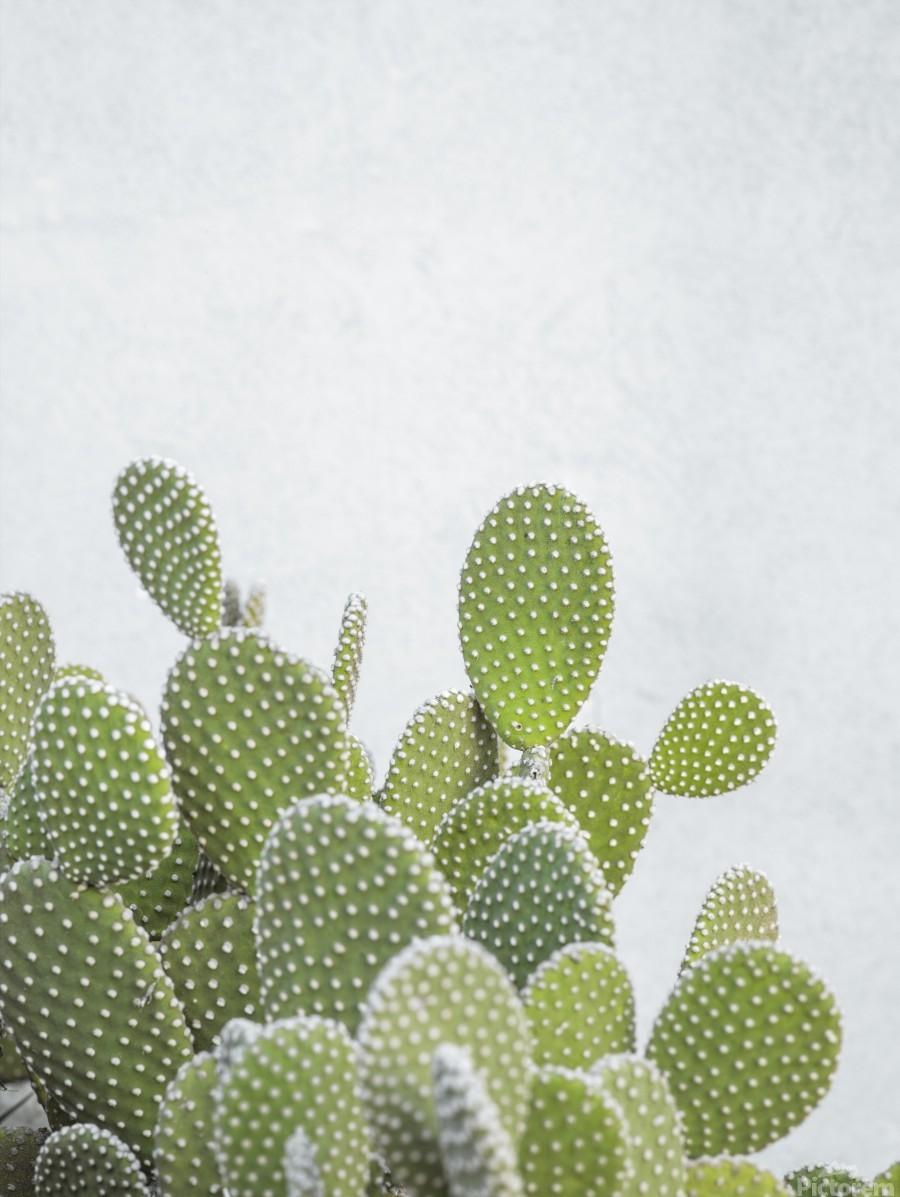 Cactus plant  Print