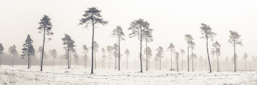 Snowy forest in winter  Print