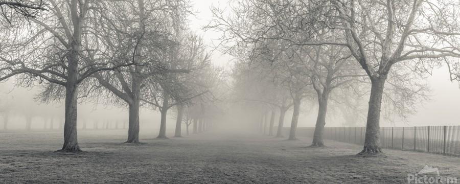 Pathway through trees  Print