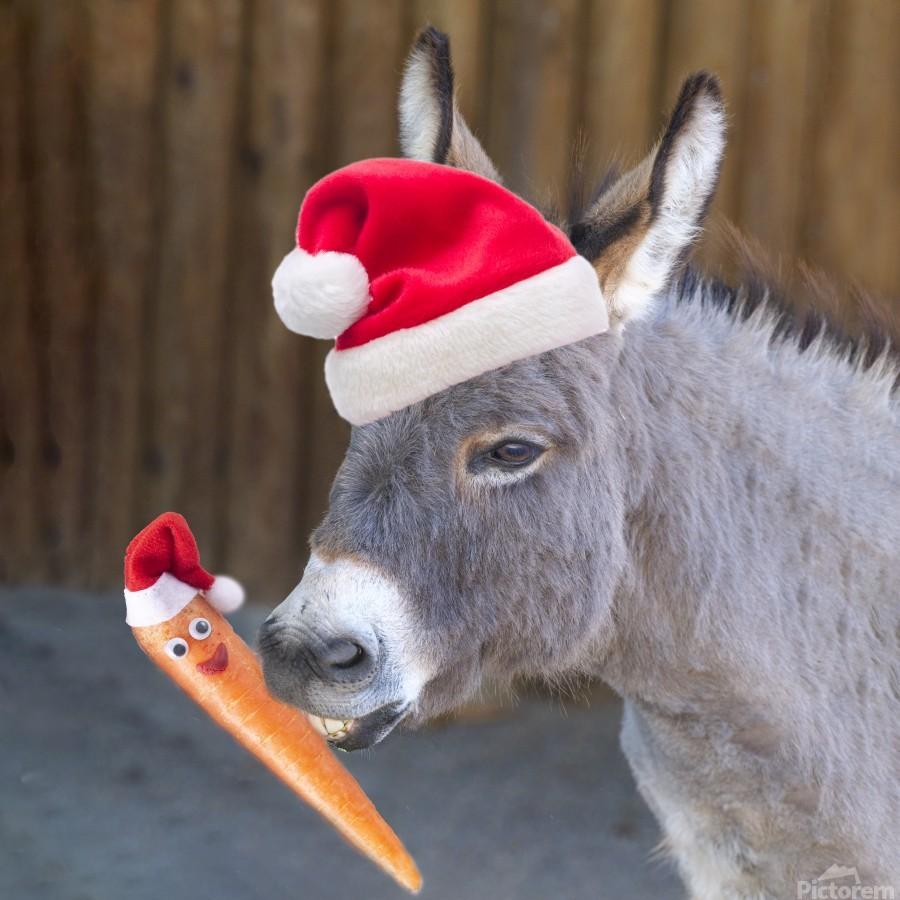 Donkey with Santa hat  Print