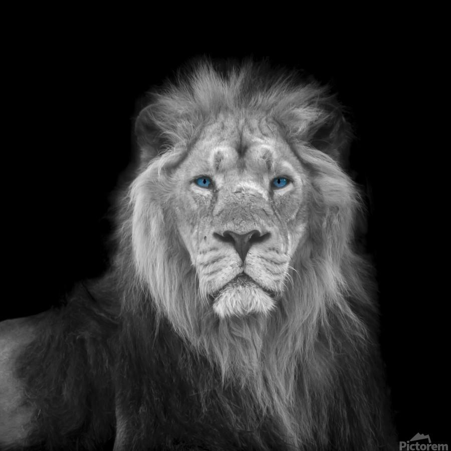 Lion face  Print