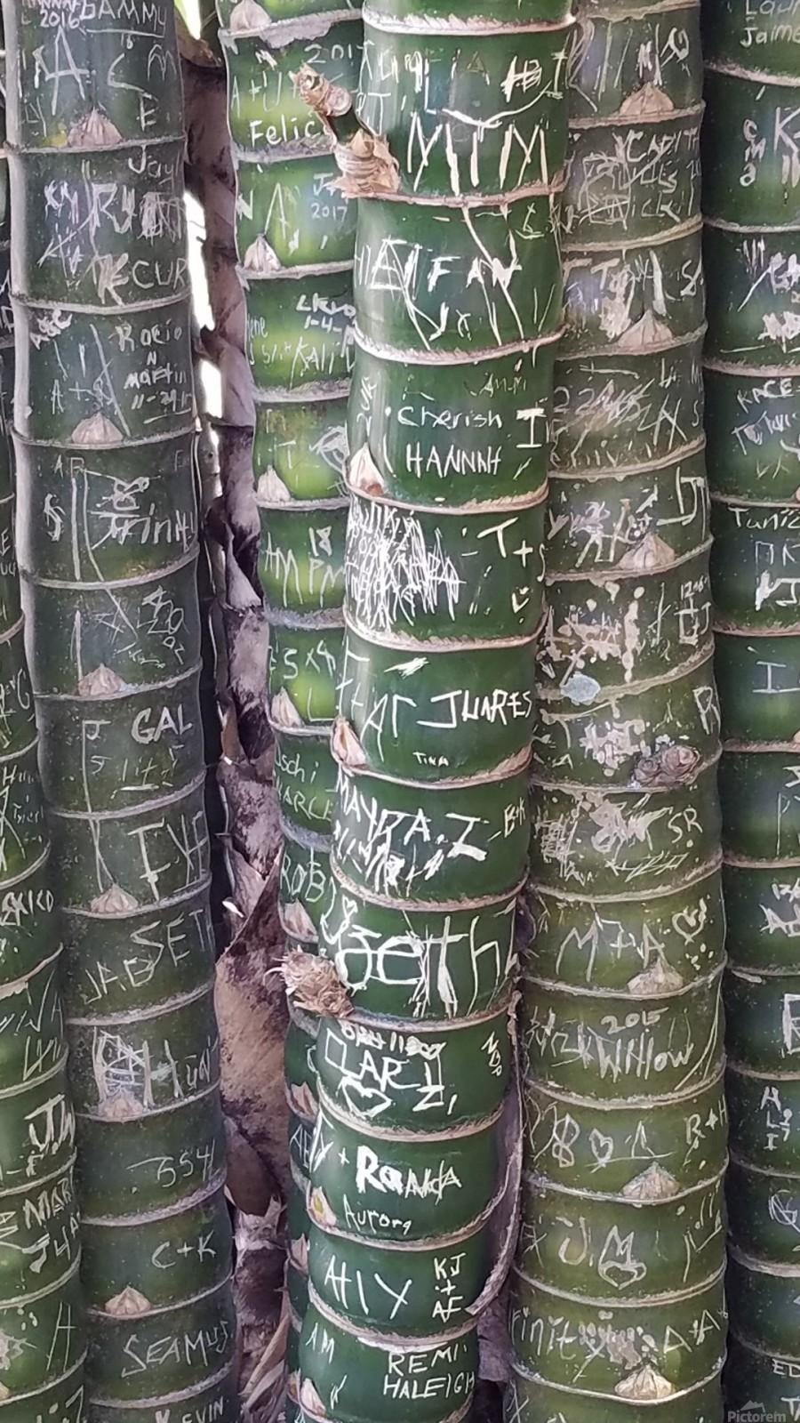 Bamboo Sign  Print