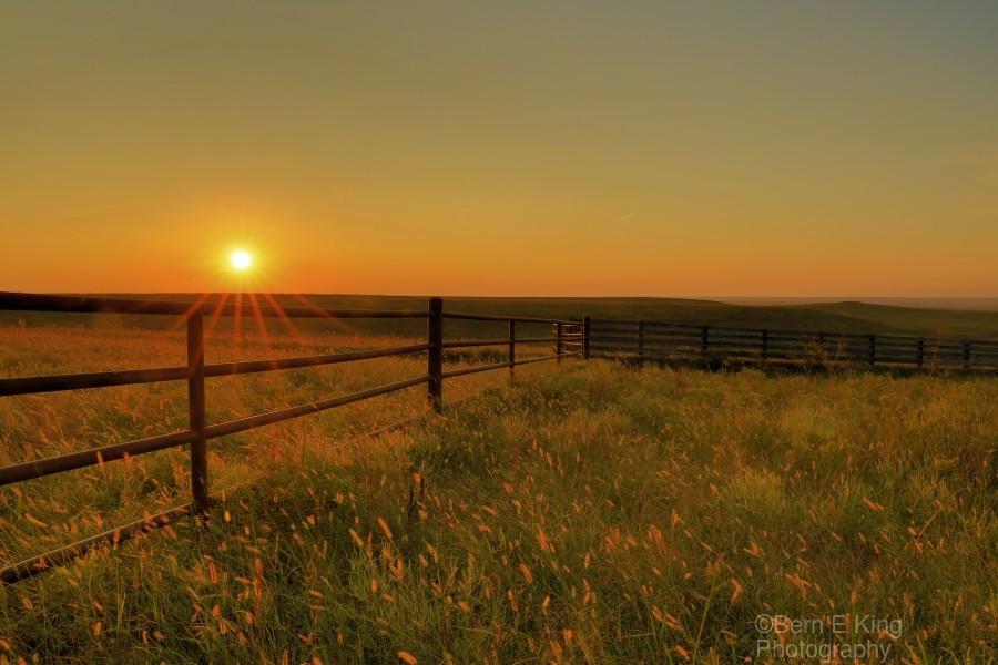 Cattle Pens Morning Sunburst  Print