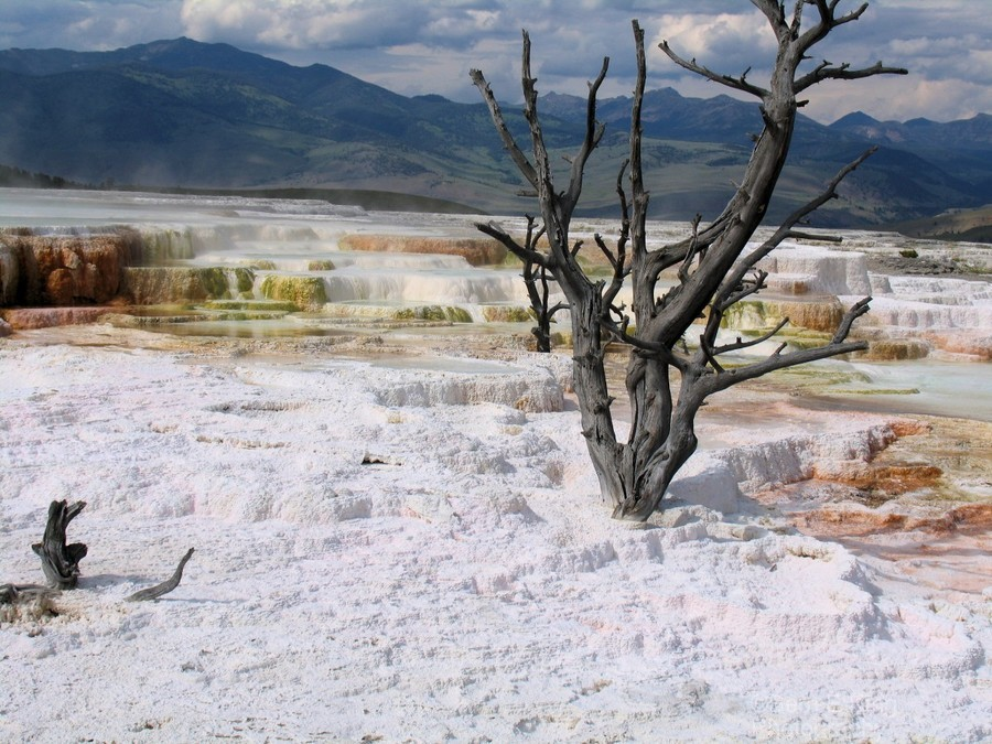 Mammoth Hot Springs Yellowstone National Park  Print