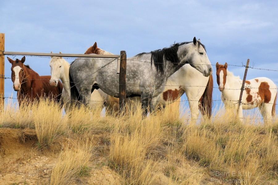 Little Bighorn Ponies  Print