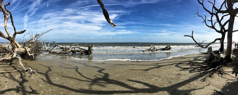 Driftwood Beach Panorama Shadows  Print