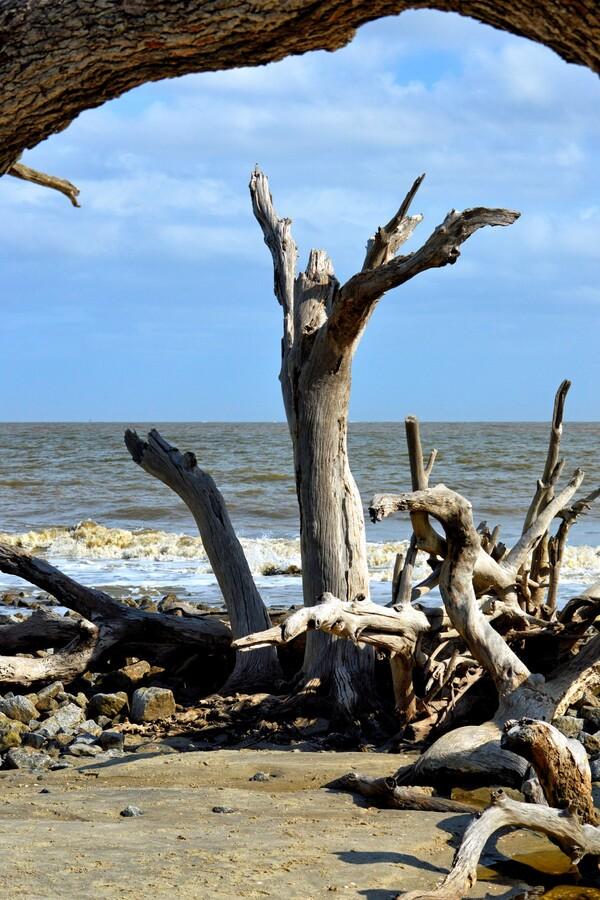 Driftwood Beach Uplifting  Print