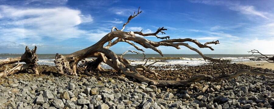 Driftwood Beach Panorama 101  Print