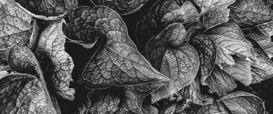 Garden Leaves  Print