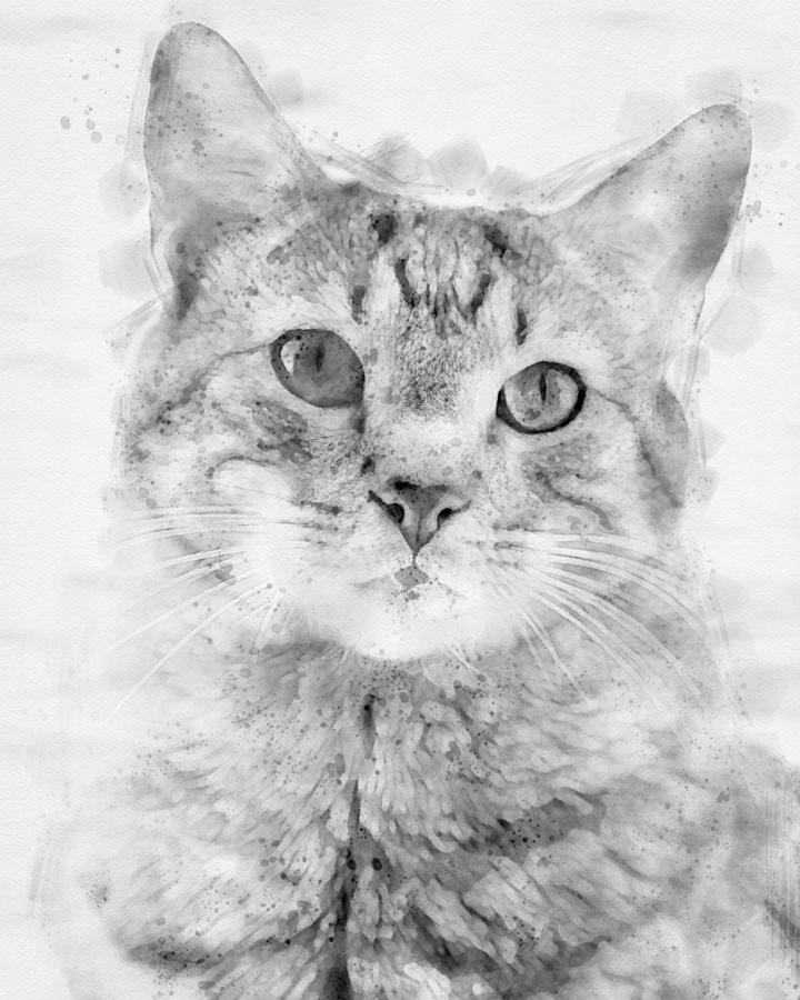 Kitten Noir  Print