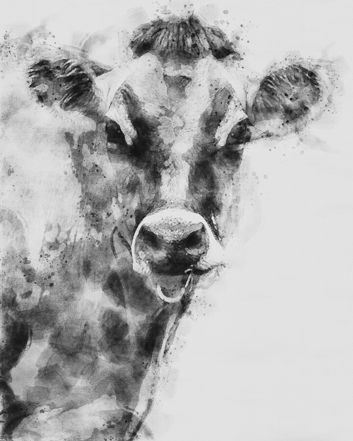 Dairy Cow Black and White  Print