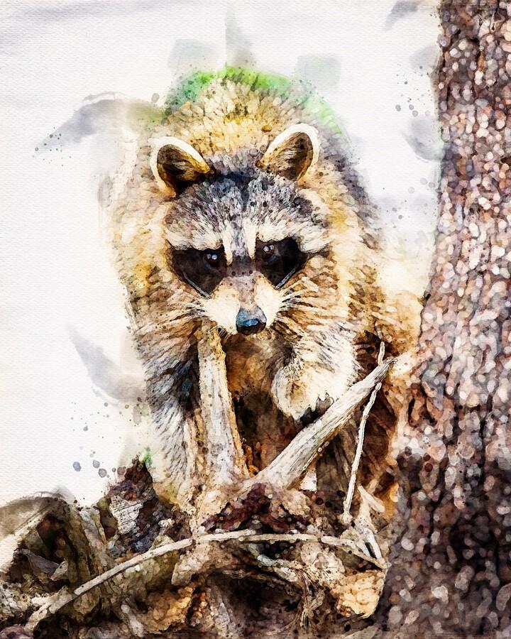 Raccoon In The Woods  Print