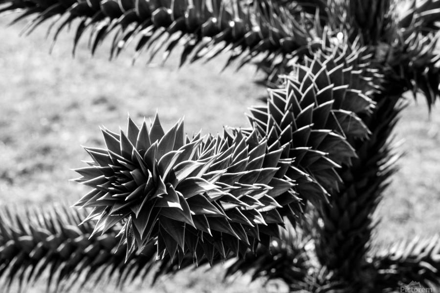 Plant Image BW  Print